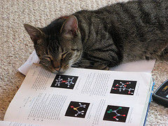 science-cat