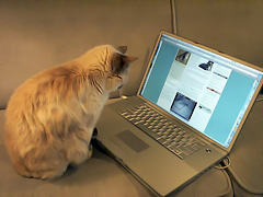 cat whit computer