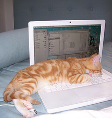 cat on mac